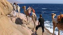 Camel Ridding marsa alam safari from Camel Yard, Marsa Alam, Nature & Wildlife