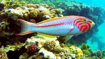 DAY SCUBA DIVING TOUR FROM SHARM EL SHEIKH, Sharm el Sheikh, Scuba Diving