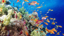 RAS MOHAMMED DAY SNORKELING TOUR BY BOAT FROM SHARM EL SHEIKH, Sharm el Sheikh, Day Cruises