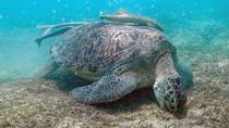 Snorkeling and lunch, Marsa Alam, Day Cruises