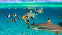 Full-Day Bora Bora Lagoon Cruise Including Snorkeling with Sharks and Stingrays, Bora Bora