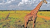 Nairobi National Park and David Sheldrick Elephant Orphanage Tour, Nairobi, Attraction Tickets