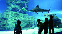 Afternoon Coex Aquarium, Han River Cruise Tour, Seoul, City Tours