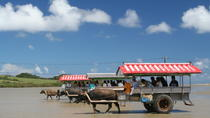 Iriomote, Yubu and Taketomi Island Tour Including Water Buffalo Cart Ride, Ishigaki
