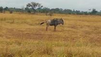 2 Days 1 Night Mikumi National Park Safari, Dar es Salaam, Attraction Tickets