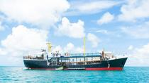 Aventura en D-Boat Antigua con tour opcional por Stingray City, Antigua, Day Cruises