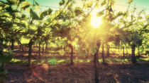 Istrian Wine Extravaganza, Pula, Day Trips
