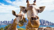 24-Hour Pass: Sydney Harbour Hop-On Hop-Off Cruise with Optional Taronga Zoo Entry Ticket, Sydney, ...