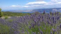 Hvar Lavender Tour, Hvar, City Tours