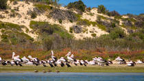 Murray Mouth Cruise, McLaren Vale, Day Cruises
