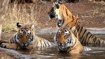 Ranthambore Wildlife Private Day Tour, Jaipur, 4WD, ATV & Off-Road Tours