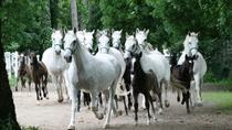 Private Tour: Lipica Stud Farm (Lipizzaner Stud Farm), Trieste, Private Sightseeing Tours