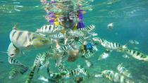 Snorkling at Amuk Bay Combination Heaven Gate, Tirta Gangga and Bat Temple, Kuta, 4WD, ATV &...