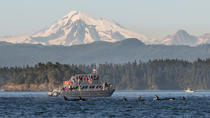 Guaranteed Whale Watching Tour, San Juan Islands, Day Cruises