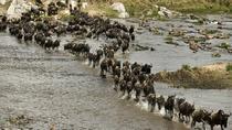 Spectacular Migration, Nairobi, Cultural Tours