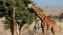 Unique Wildlife Safari, Nairobi, Cultural Tours