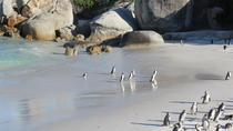 Private Cape Peninsula Tour - Cape Point, Cape of Good Hope sightseeing, Cape Town, Cultural Tours
