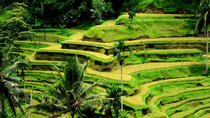 Full-day Private Shore Excursion: Best of Bali Island, Ubud, Ports of Call Tours