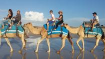 2-Hour Camel Ride, Agadir, Nature & Wildlife