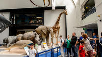 London Natural History Museum Dinosaur Discovery Family Tour, London, Historical & Heritage Tours