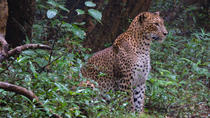 2 Days Tour to Wilpattu & Anuradhapura from Colombo, Colombo, Multi-day Tours