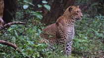 2 Days Tour to Wilpattu & Anuradhapura from Negombo, Negombo, Airport & Ground Transfers