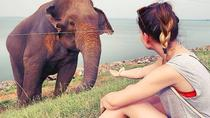 DAY EXCURSIONS TO UDAWALAWE NATIONAL PARK FROM NEGOMBO, Negombo, Attraction Tickets