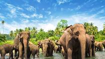 Day Tour To Pinnawala Orphanage From Colombo, Colombo, Day Trips