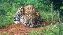 Day Tour to Wilpattu National Park from Colombo, Colombo, Safaris