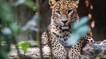 Day Tour to Wilpattu National Park From Kalutara, Kalutara, Attraction Tickets