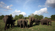 Highlights Of Dambulla & Kaudulla National Park Day Tour From Colombo, Colombo, Attraction Tickets