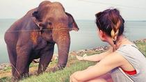 Udawalawe National Park Safari From Mount lavinia, Colombo, Attraction Tickets