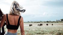 Wild Elephant Safari At Kaudulla National Park From Colombo, Colombo, Attraction Tickets