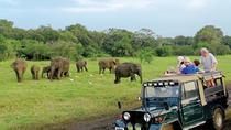 Wild Safari Udawalawe from Bentota, Bentota, Private Sightseeing Tours