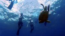 Sunset Plankton Eco Snorkel Tour from Phi Phi Island, Krabi, Eco Tours