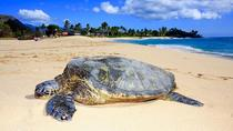 Pineapple Beach Excursion, Oahu, Nature & Wildlife