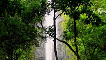 Rainforest Waterfall Excursion, Oahu, Nature & Wildlife