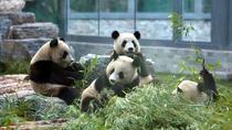 Beijing Walking Tour - Hutong Rickshaw Ride & Drum Show & Panda House at Zoo, Beijing, Zoo Tickets...