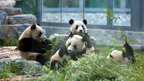 Day Tour to Mutianyu Great Wall and Panda House at Beijing Zoo, Beijing, Zoo Tickets & Passes