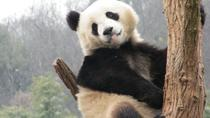 Panda House at Beijing Zoo and Summer Palace Walking Tour, Beijing, Zoo Tickets & Passes