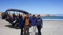 Flight the Nazca Lines and Visit San Fernando Reserve 3--Day Program, Nazca, Multi-day Tours