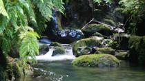 Levada do Rei, Madeira, Private Sightseeing Tours