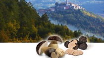 TRUFFLE HUNTING & WINE TASTING IN ISTRIA (VIP Small-group DAY TOUR), Koper, Ports of Call Tours