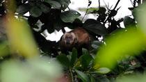 03 days tour Pacaya Samiria national reserve with Jungle Reps, Iquitos, 4WD, ATV & Off-Road Tours