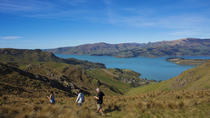 1-Day Guided Walking Tour and Picnic on Banks Peninsula, Christchurch, Walking Tours