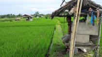 3-hour Bali Rice Terraces Small-Group Hiking Tour, Kuta, Hiking & Camping