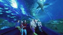 Private Rio de Janeiro Marine Aquarium (Aquario) Tour for Kids and Families, Rio de Janeiro,...