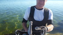 Oyster Farm and Tasting Tour with Hotel Pick-up and return from Port Lincoln, Port Lincoln, ...