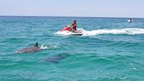 Waverunner Dolphin Tour, Destin, Waterskiing & Jetskiing