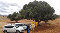 Day Trip to Mini Sahara, Agadir, Day Trips